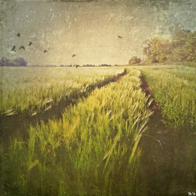 iPhoneography landscape