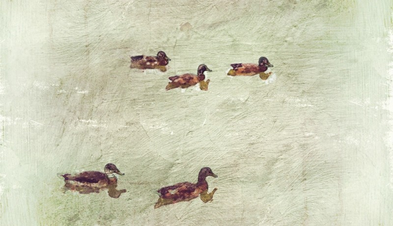 iPhone painting - quackers