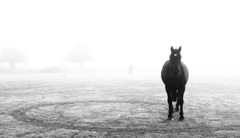 provoke - horse in fog